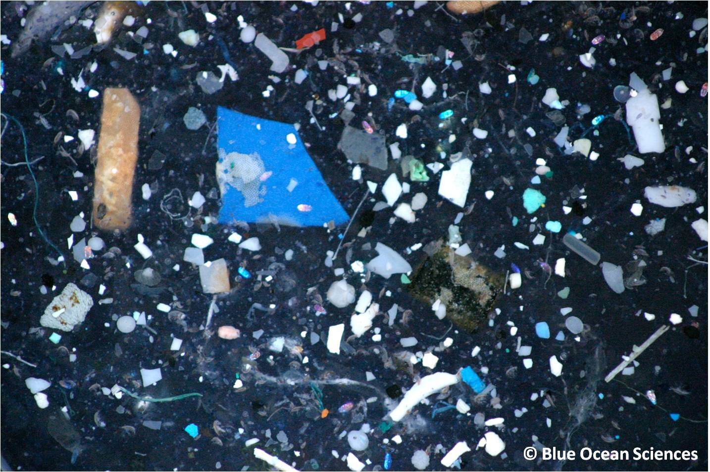 The problem of plastic in the ocean